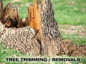 TreeTrimming-Removals