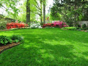 lush_lawn-Copy